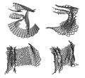 Crumpled graphene