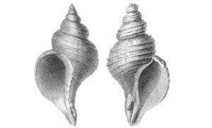 Chiral shells