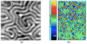 Scanning Hall probe microscopy image of a superconductor-ferrimagnet bilayer showing (a) the labyrinthine domain structure and (b) the effect of an applied current on the structure. Copyright IOP Publishing Ltd 2011.