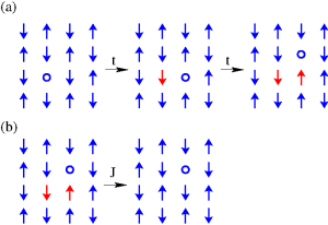 The one-band model is the preferred model in this field, because of its conceptual simplicity. (a) Nearest-neighbour hoping of the hole in the antiferromagnetic lattice creates a string of wrongly oriented spins (shown in red); (b) Spin-fluctuations allow pairs of wrongly oriented spins to un-flip themselves. Combined together, the processes in (a) and (b) allow the hole to move efficiently to any of its second or third nearest-neighbour sites, without disturbing the magnetic order.