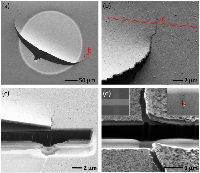 Separation between the bottom electrode (BE) and the under layers of the Pt/TiO2−x/Pt RS cell due to bubble cracking from Qiaonan Yin et al 2016 J. Phys. D: Appl. Phys. 49 09LT01