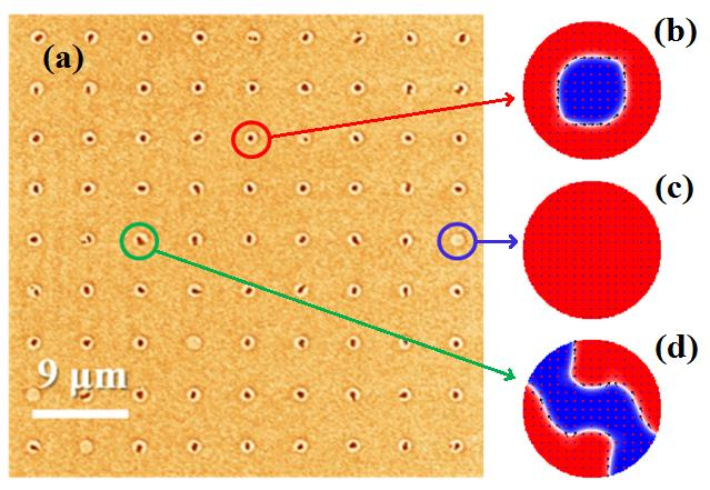 (a) MFM image of a 45×45 μm2 array of 1.25 μm diameter [Co/Ni]10 dots after demagnetization under AC in-plane field. The red, blue and green circles show single bubble state, single domain state, and multi-domain state, respectively. (b-d) Corresponding magnetic states, as obtained by means of micromagnetic simulations.
