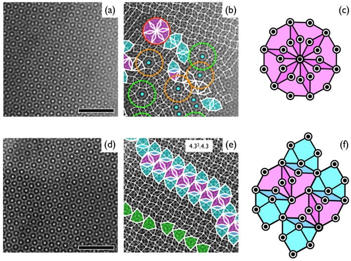 HRTEM images of two characteristic defects in square–triangle tilings: (a)–(c) 12-fold wheel arrangement and (d)–(f) stripe bundle arrangement. (a) and (d) Original HRTEM images, (b) and (e) their square–triangle tilings, and (c) and (f) tiling models of the two defects. In (b), defect-mediated (red) and defect-free (green) 12-fold wheel arrangements along with two-mixed arrangements (orange) are shown, where six-fold symmetric hexagons are shown as blue dots. The scale bar is 50 nm.