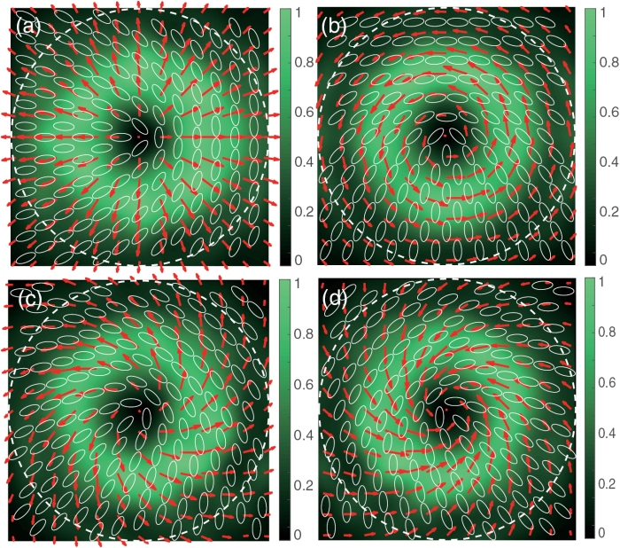 Polarization conversion by an all-dielectric metasurface of a linear polarization mode to vector modes a) radial polarization b) azimuthal polarization c,d) a superposition of radial and azimuthal modes. Image taken from Tongming Liu et al 2017 J. Phys. D: Appl. Phys. 50 334001, All Rights Reserved.